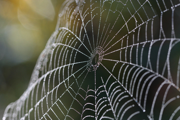 Keep spiders out of homenaturally